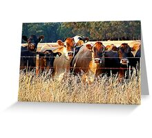 MOO! Greeting Card