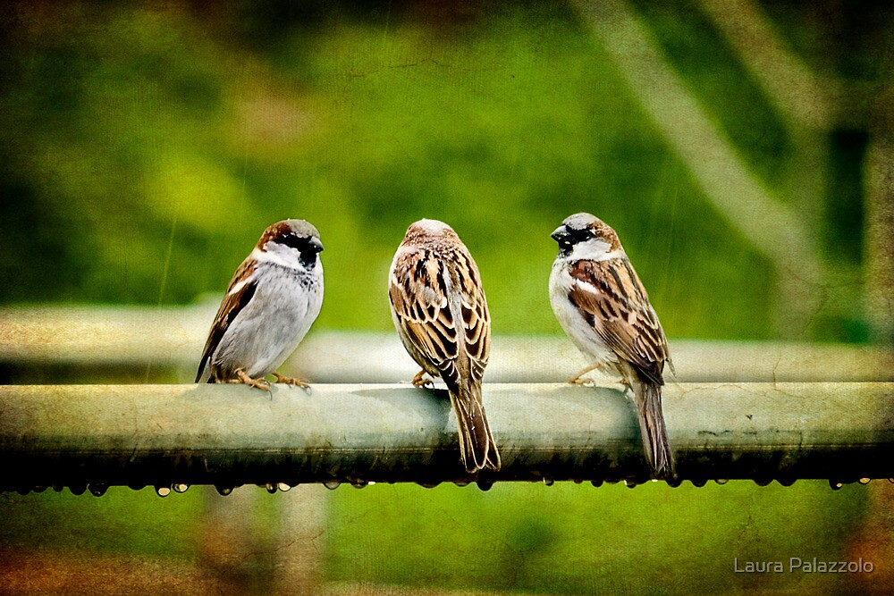 Rain is for the Birds by Laura Palazzolo