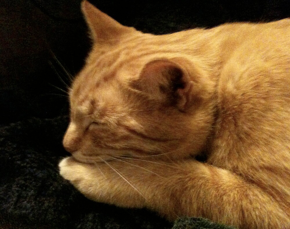 Spike Kitty in Repose by Ann Marie Hoff