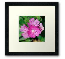 California Wildflowers • Marin Headlands  •  Series Framed Print