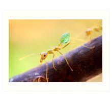 Green Ant Art Print