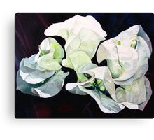 """Bugambilia"" - oil painting of white bougainvillea blossoms Canvas Print"