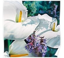 """""""Three Arums"""" - arum lilies in  the sunshine Poster"""