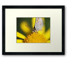 Yellow lunch Framed Print