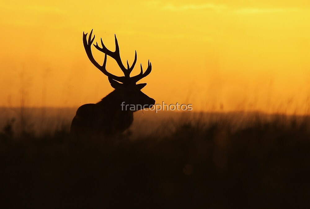 The Pride Of Nature by Franco De Luca Calce
