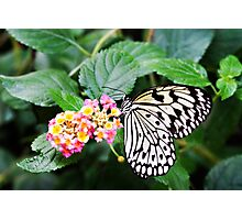 Beautiful butterfly feeding on a flower Photographic Print