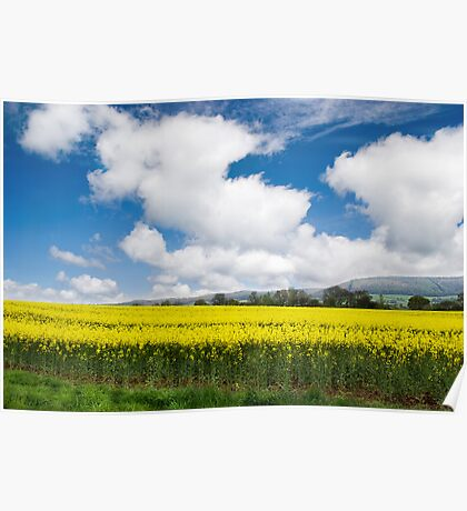 Rapeseed Plantation Poster