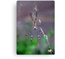 Only a spider..a Golden orb-web spider! Canvas Print