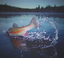 The Rainbow Trout by Brian Pelkey