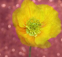 Party Poppy by Lisa Knechtel