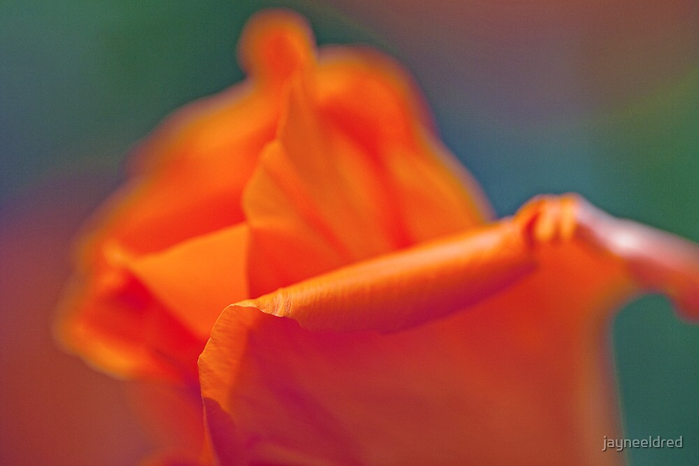 Abstract Poppy by jayneeldred