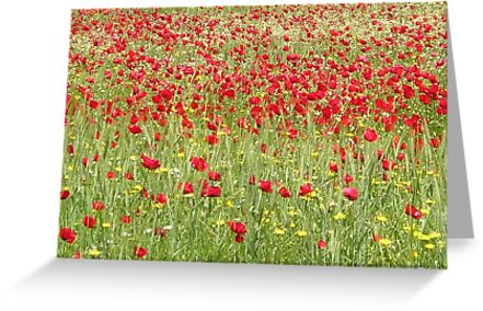 Meadow With Beautiful Bright Red Poppy Flowers by taiche