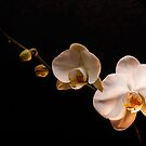 Orchid by Simon Marsden