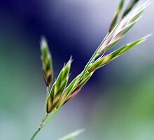 Simple Grass Seeds by jayneeldred