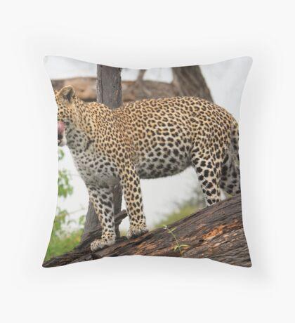 Fat cat - Okavango Delta Throw Pillow