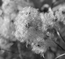 Whispering Seeds by TabithaFox