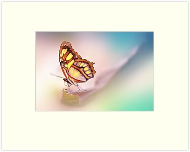 Malachite Butterfly by Lyn Evans
