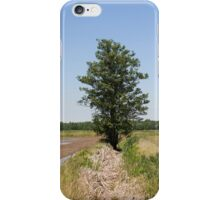 tree in spring iPhone Case/Skin