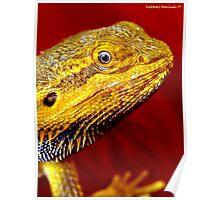 Dragons' Portrait Poster