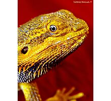 Dragons' Portrait Photographic Print