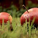 Apples in Summertime by Kazi Omar