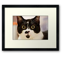 Hi, my name is Bertie Framed Print