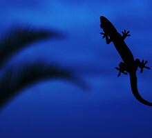 Blue Gecko by Matthew Pugh