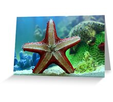 Starfish details Greeting Card