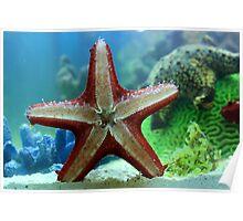Starfish details Poster