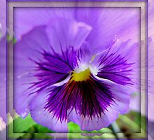 Mirrored Pansy by scenebyawoman