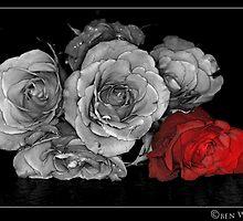 Red Rose colour pop by Ben  Warren