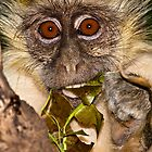 Green monkey baby by Shaun Whiteman