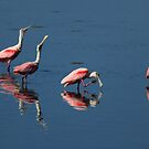 roseate spoonbill 's by kathy s gillentine