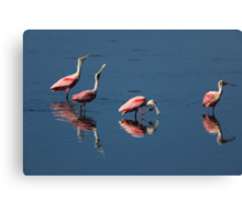 roseate spoonbill 's Canvas Print