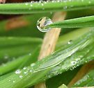 green rained grass2 by millymuso
