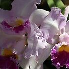 Orchids by Juana Maria Garcia Domenech