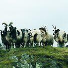 Jacob's Sheep by sarnia2