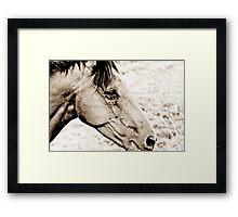 Equus III Framed Print