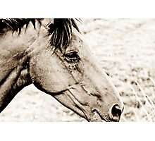 Equus III Photographic Print