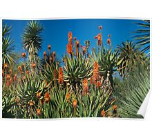 Cactus Flower in Huntington Library in LA, CA Poster