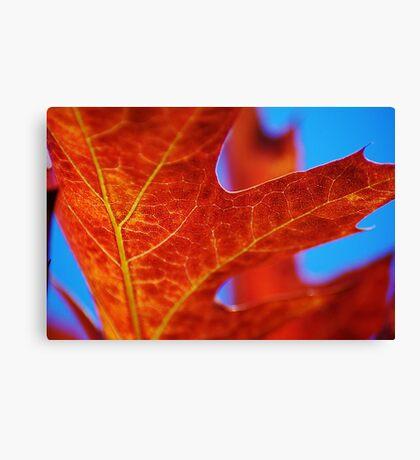 Autumn American Oak Canvas Print