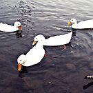 sitting ducks  by Morgan Koch