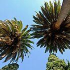 Palm Trees in LA, CA by Joe Bashour