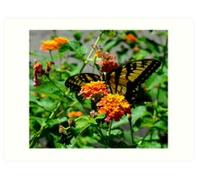 Butterfly and Lantana V Art Print