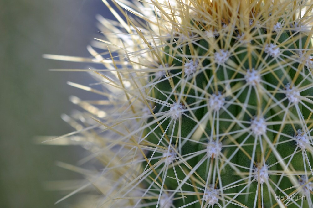 Cactus by MaryLynn