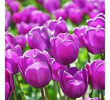 Purple Illumination Photographic Print