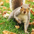 Little fella in Hyde park by Mahjabeen Mankani