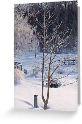 Back Yard in Winter by Pierre Frigon