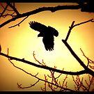 Red Tail Hawk by AngieBanta