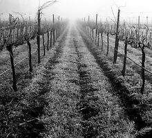 Napa Valley, California by Joanne Piechota